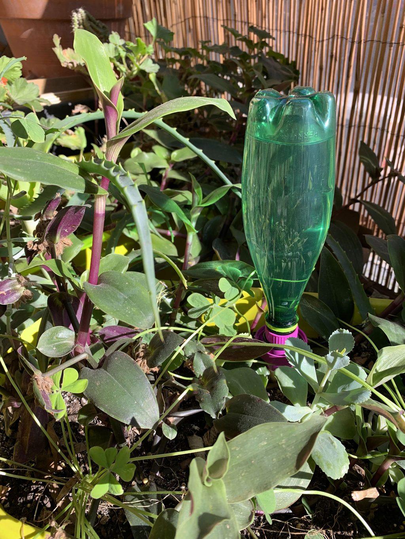 irrigateur plantes cône d'arrosage bouteille La Revue Vertu