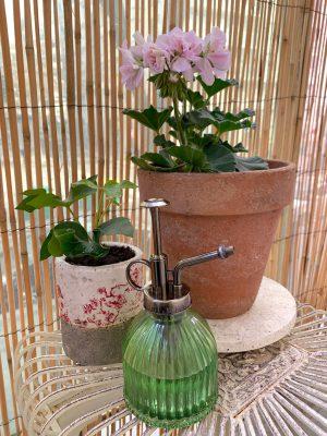 Pelargonium Géranium Shabby Chic La Revue Vertu