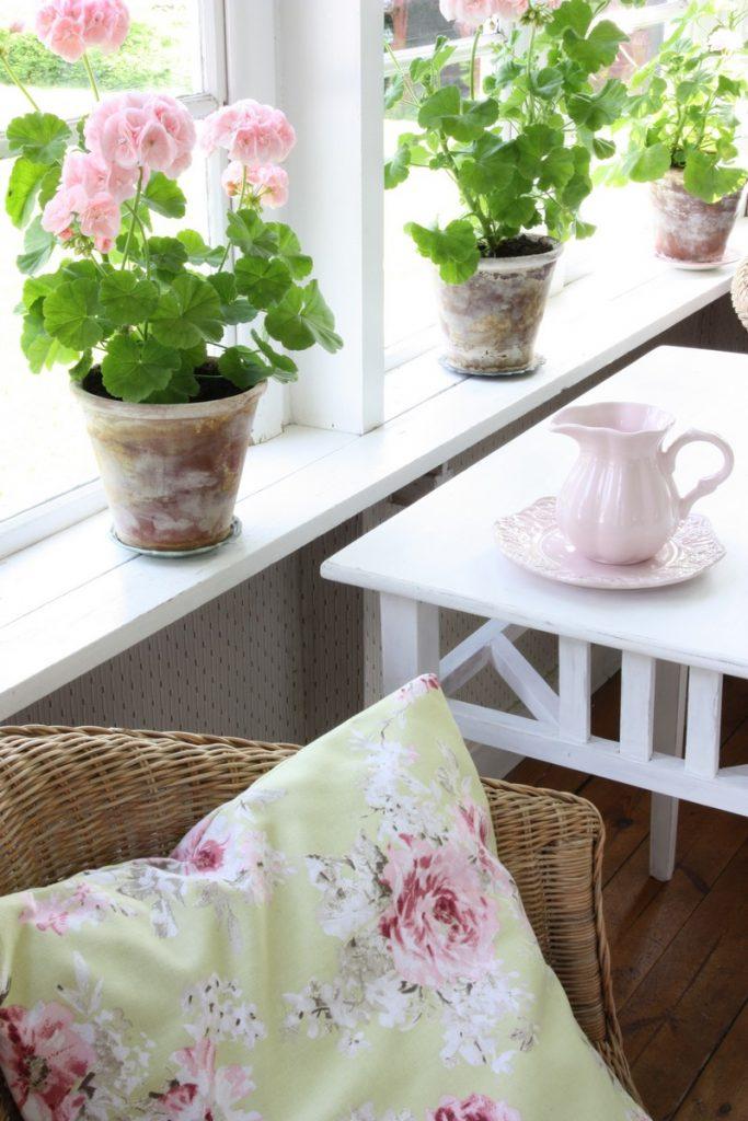 Pélargoniums rose poudré sur le bord d'une fenêtre