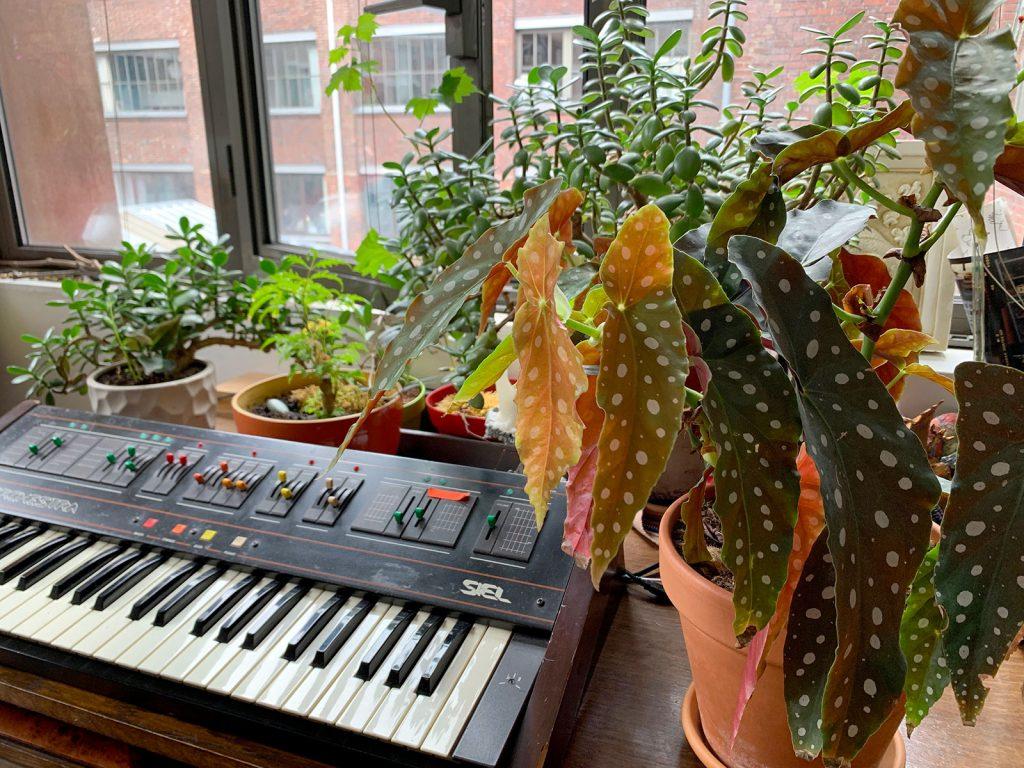 begonia maculata jungle synthe - La Revue Vertu