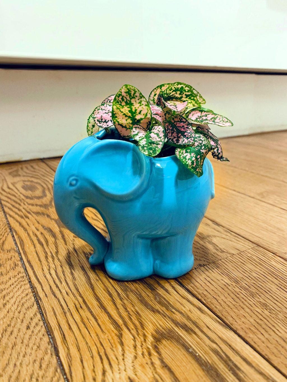 Cache-pot animaux éléphant turquoise