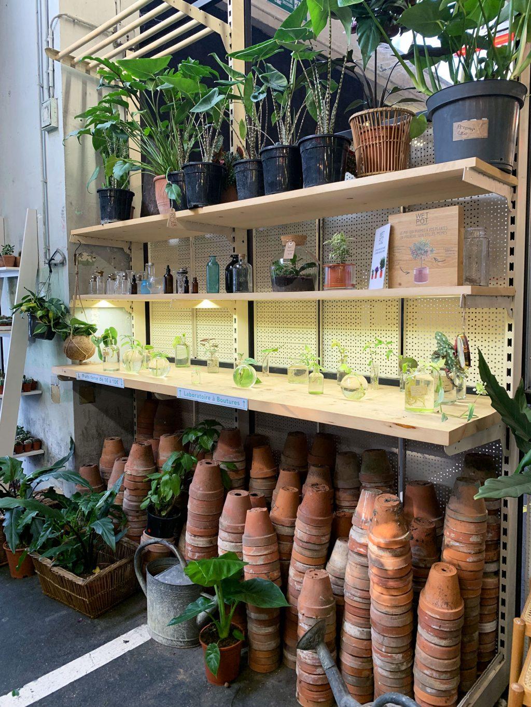 Vente privée Plantes Pour Tous Ground Control boutique