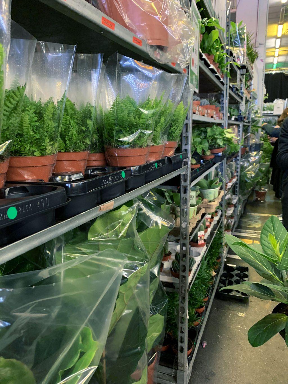 Vente privée Plantes Pour Tous Ground Control étagères