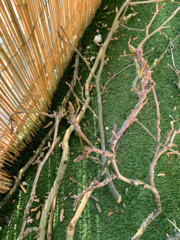 Branches des buttes chaumont pour suspension macramé - La Revue Vertu