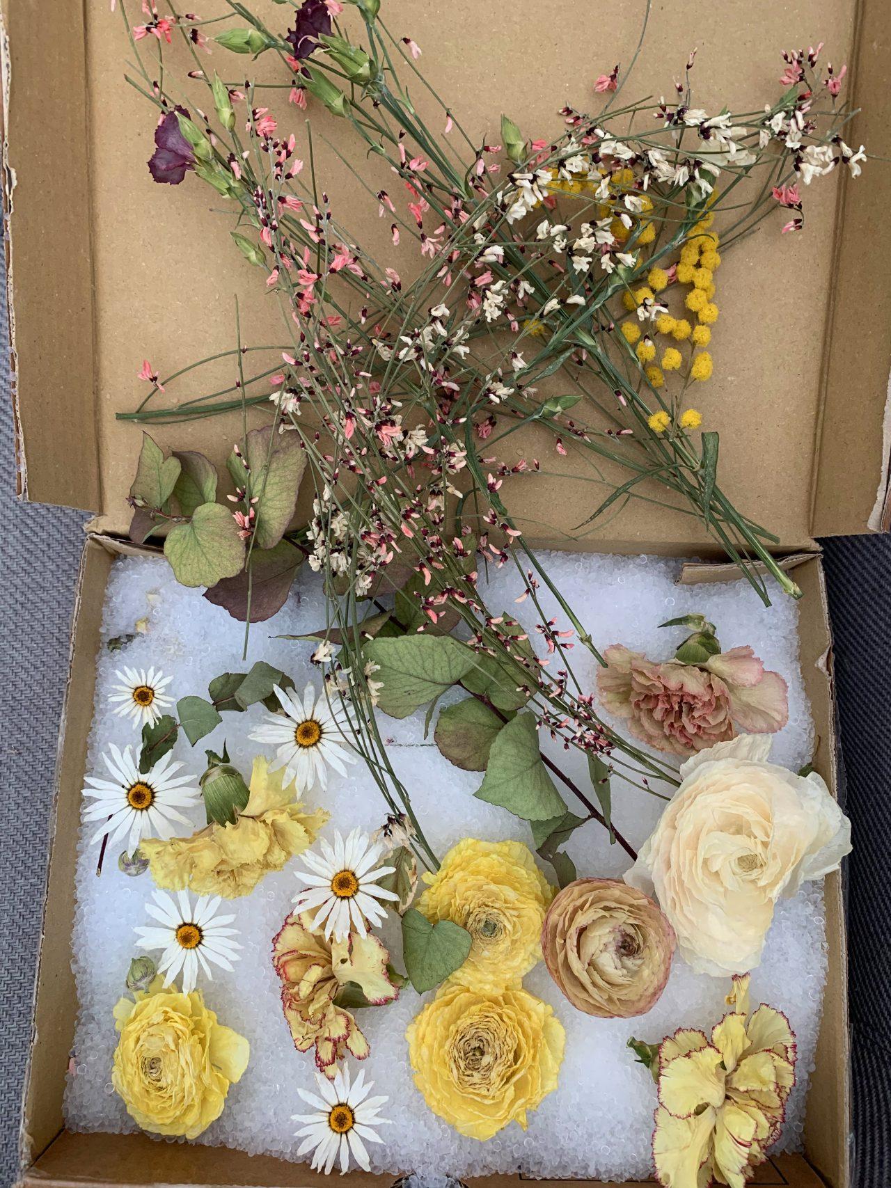 fleurs sechées avec gel de silice